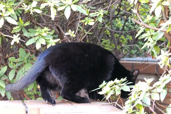 黒仔猫 退避