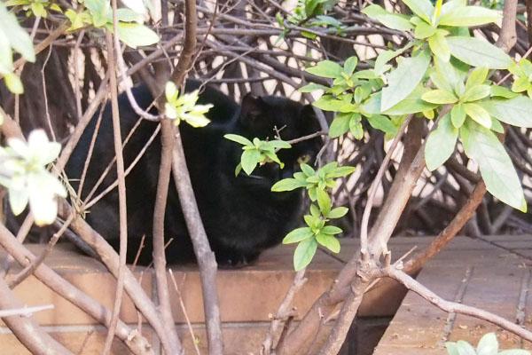 黒仔猫 ちんまり木の下