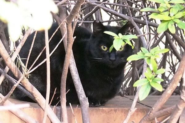 黒仔猫左ぎょっとする