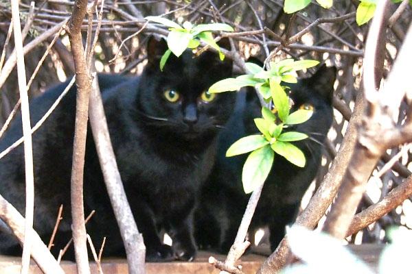 黒仔猫 並ぶ