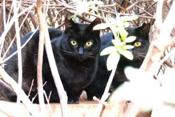 bk cat surprise