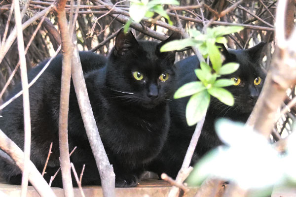 黒仔猫2匹で見つめる