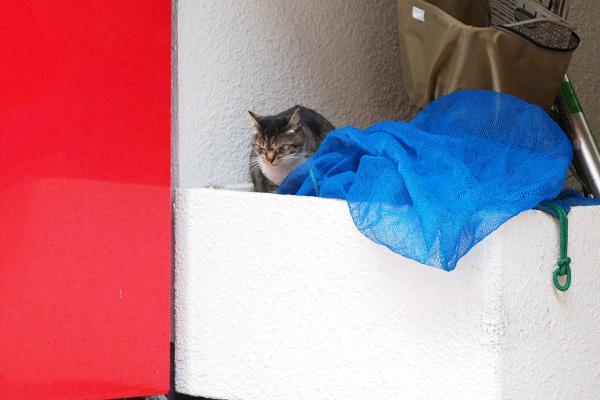 プランターに猫ゴミネットと