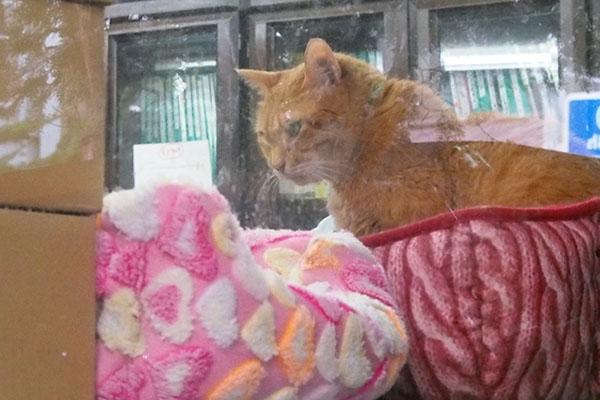 他の猫を見ているチャーちゃん