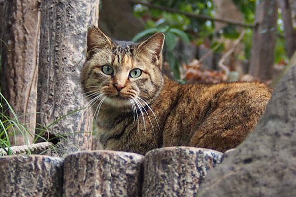 サキ 美猫さん