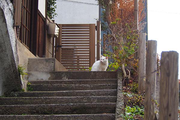 チロル君 階段の上
