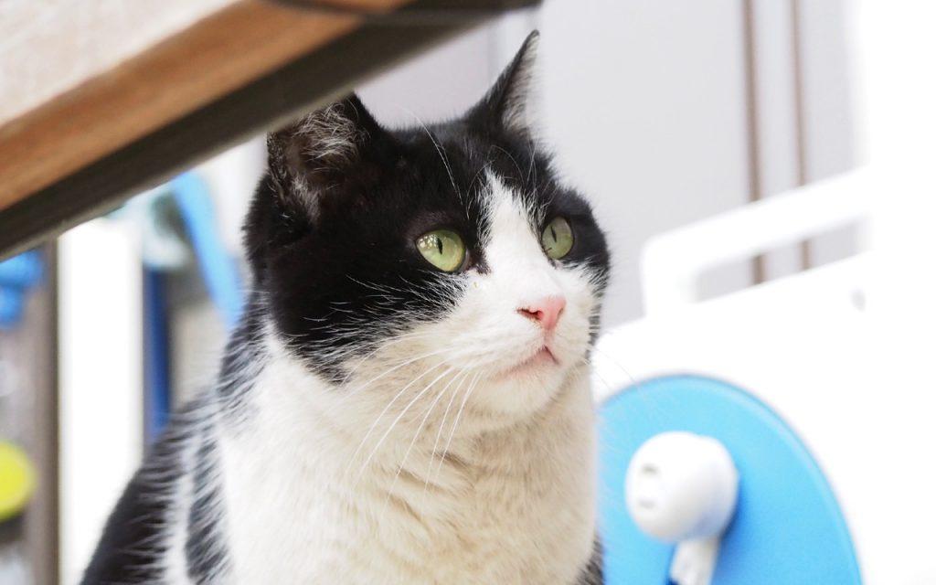 Suzu look up in pastelcol
