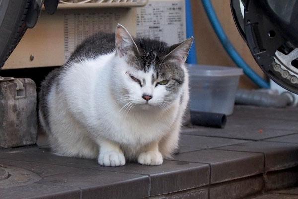 kei grumpy face