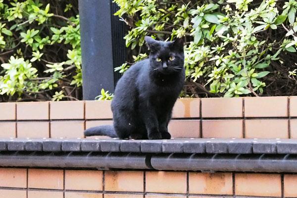 後ろの方に黒仔猫1