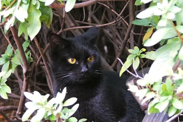 隠れた黒仔猫アンジュを見てる