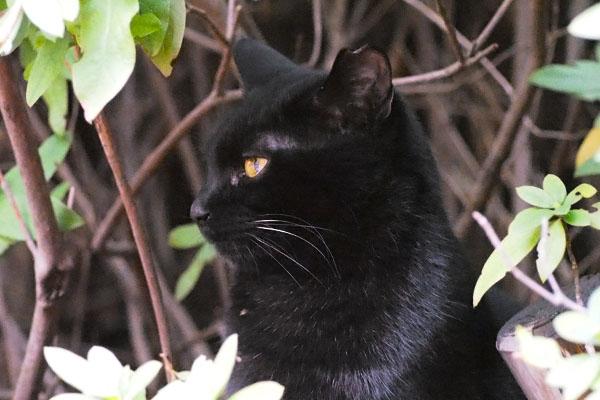黒仔猫の横顔