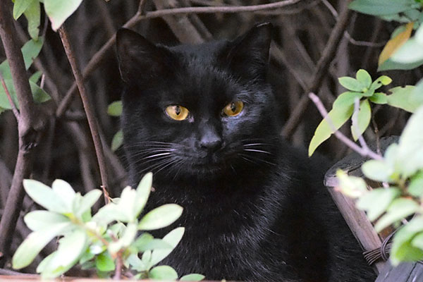 アンジュをいつも見ている黒仔猫