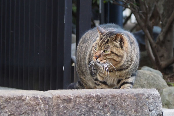 fung coming Narikoplace