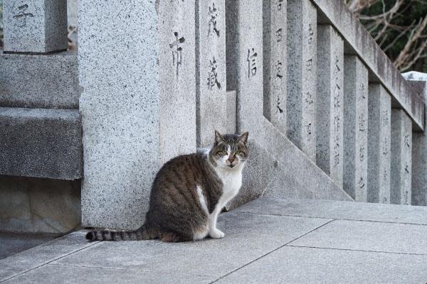 階段の途中の雫