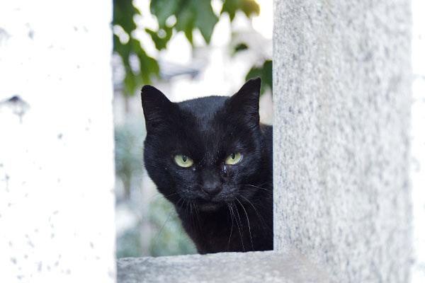 ココ 覗き見る