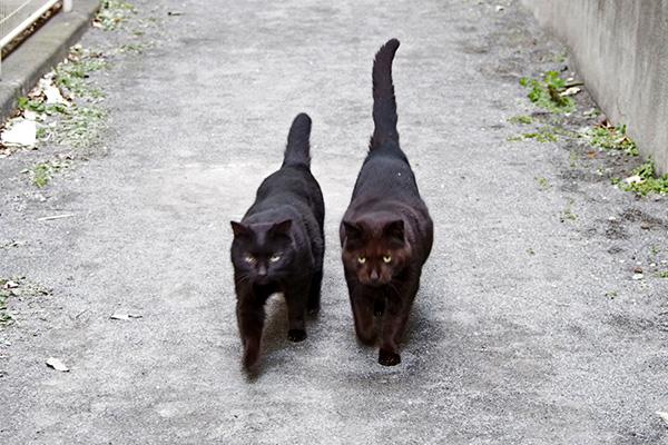 並んでやって来るティアとミトン