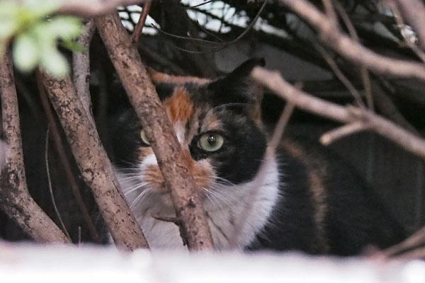 リコ低木の下