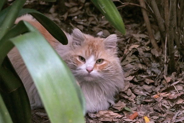 jeanne sitting on the leaves