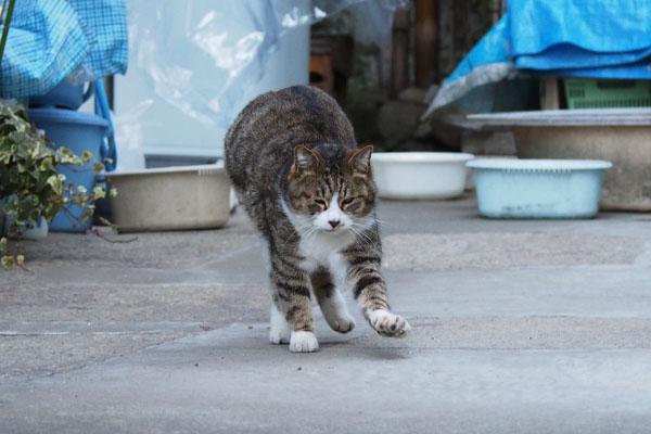 猫立て伸び終わりかけ サーヤ