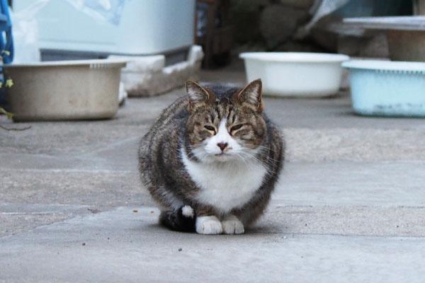 サーヤ まるっと座る猫