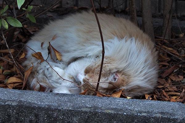 ジャンヌ 丸くなって寝ている