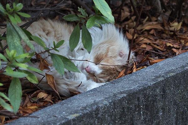 ジャンヌの寝顔
