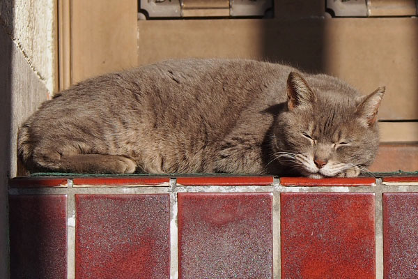 グレー猫 結局寝たシピ