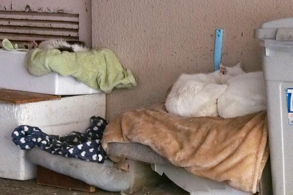 白猫2とテル