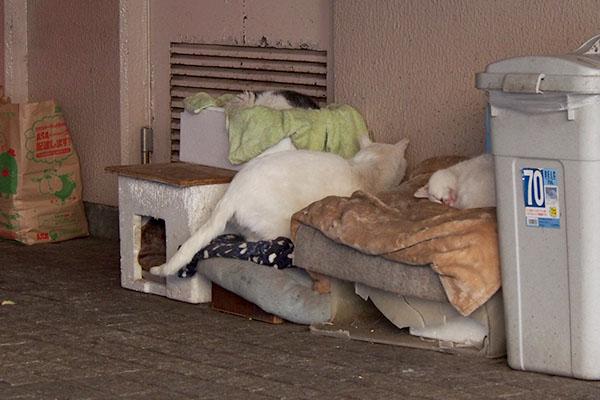 チロル 結局寝床へダイブ