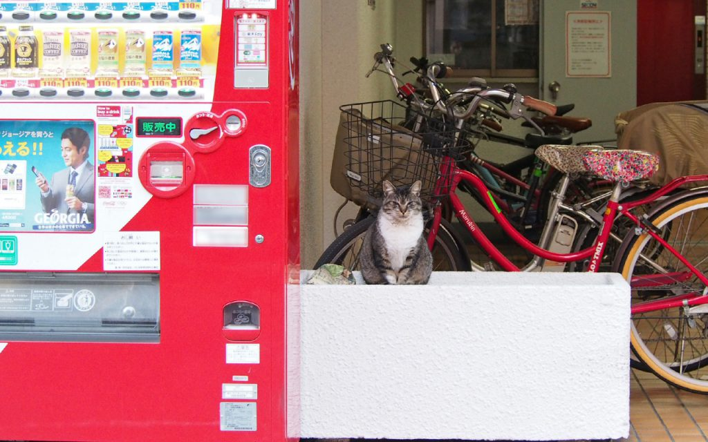 自販機と猫店員ゆう