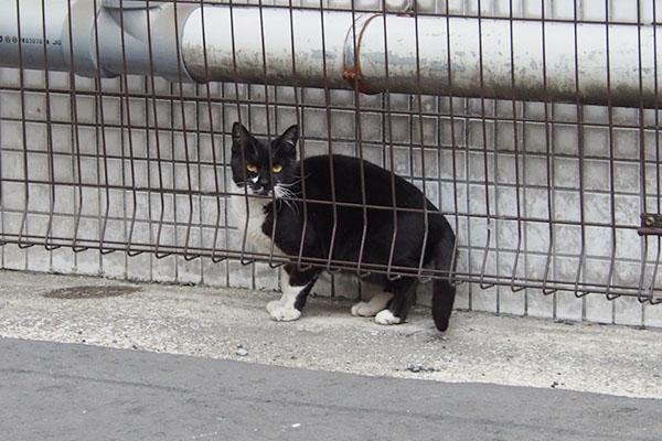 逃げる感じの白黒猫