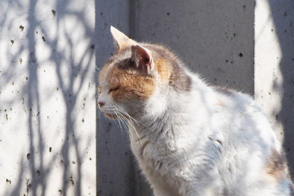 mike_anesama profile in the sunlight