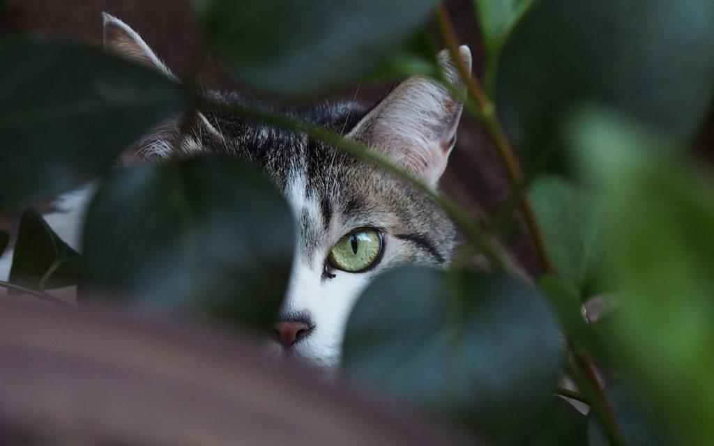 kei peeping me
