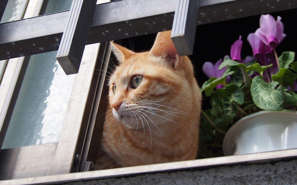 Sora watching stray cats