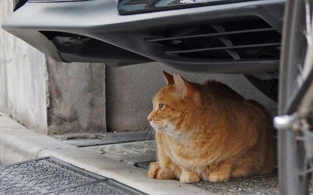 himawari watching door