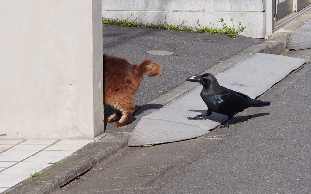 mofukiji tail and crow
