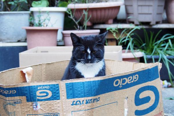 hono in the box