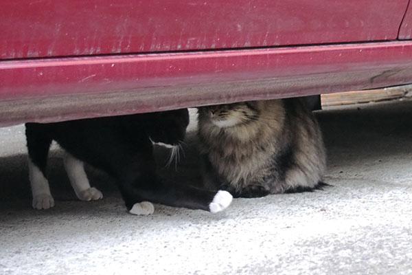 仲良し2匹車の下