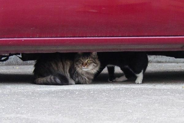 ほのも車の下へ