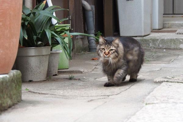 こちらを見ながら歩くらんぽ君