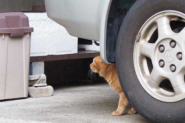 車の下から見上げるナチャ
