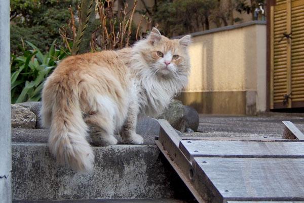 階段の上で振り返る ジャンヌ
