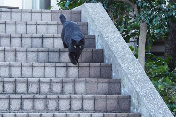 階段を下りるメイラ