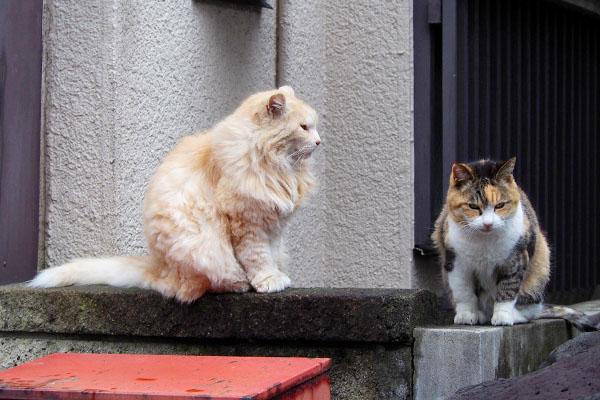 ナリコマ君とオトワ1