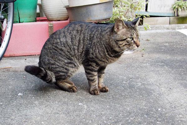 まだほっそりな体型キー坊