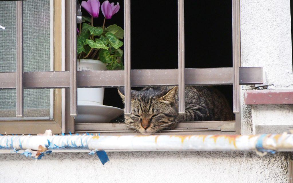 キー坊 部屋侵入で外を見る