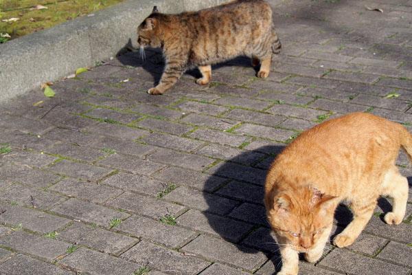 一緒に歩くサキとコルレ