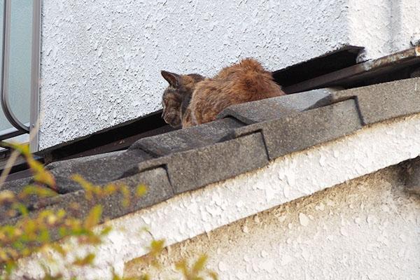 屋根にルルの背中