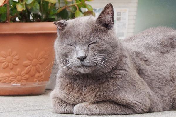 roshigure sleeping face cl