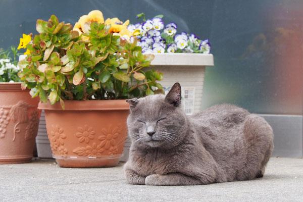 花の横にロシグレ